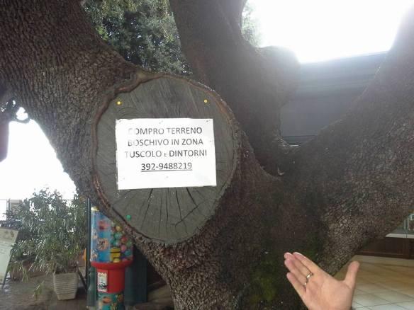 ti fai una passeggiata a p.zza Borghese... e trovi strani acquirenti di aree boschive!