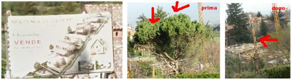 belvedere_alberi